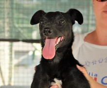 ASTRID, Hund, Pinscher-Mix in Italien - Bild 4