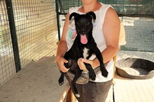 ASTRID, Hund, Pinscher-Mix in Italien - Bild 5