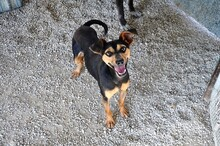 EWALD, Hund, Pinscher-Mix in Rieden - Bild 6