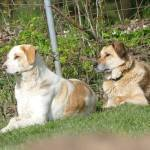 TERRY, Hund, Mischlingshund in Gefrees - Bild 3