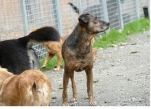 JOSEF, Hund, Boxer-Mix in Gefrees - Bild 3