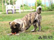 LEO, Hund, Mops-Mix in Slowakische Republik - Bild 10