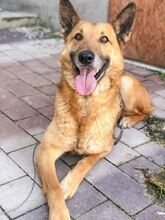DOSS, Hund, Malinois-Mix in Slowakische Republik - Bild 10