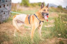 DOSS, Hund, Malinois-Mix in Slowakische Republik - Bild 6