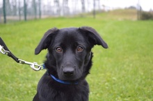 ROSA-LUXEMBURG, Hund, Labrador Retriever-Mix in Chemnitz - Bild 2