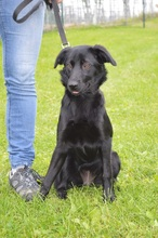 ROSA-LUXEMBURG, Hund, Labrador Retriever-Mix in Chemnitz - Bild 4