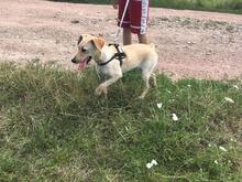 SZTELLA, Hund, Labrador-Mix in Neuss - Bild 2