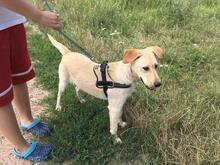 SZTELLA, Hund, Labrador-Mix in Neuss - Bild 3