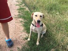 SZTELLA, Hund, Labrador-Mix in Neuss - Bild 4