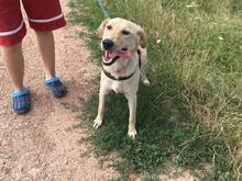 SZTELLA, Hund, Labrador-Mix in Neuss - Bild 7