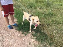 SZTELLA, Hund, Labrador-Mix in Neuss - Bild 8