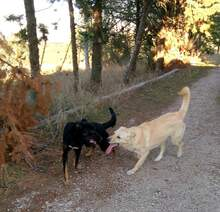 MELODY, Hund, Labrador-Mix in Italien - Bild 4