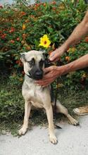 SPIKE, Hund, Malinois-Mix in Spanien - Bild 4