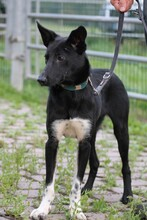 JOLO, Hund, Pinscher-Mix in Lohra-Reimershausen - Bild 2