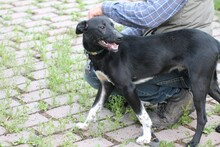 JOLO, Hund, Pinscher-Mix in Lohra-Reimershausen - Bild 4