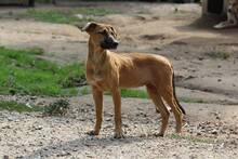 NUTS, Hund, Podenco-Mix in Portugal - Bild 6