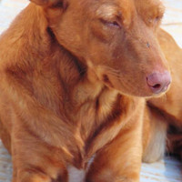 LITTLE, Hund, Podenco in Spanien - Bild 1