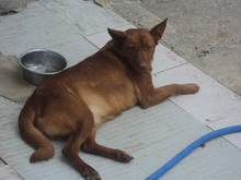 LITTLE, Hund, Podenco in Spanien - Bild 6