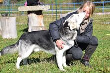 MANSON, Hund, Siberian Husky-Mix in Slowakische Republik - Bild 4