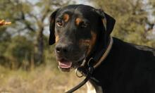 MEMFIS, Hund, Dobermann-Mix in Spanien - Bild 6