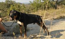 MEMFIS, Hund, Dobermann-Mix in Spanien - Bild 8