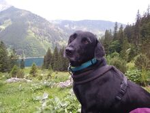 JULIE, Hund, Labrador-Mix in Weilheim - Bild 1