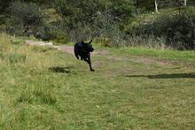 JULIE, Hund, Labrador-Mix in Weilheim - Bild 16