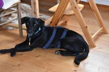 JULIE, Hund, Labrador-Mix in Weilheim - Bild 9