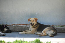 ADA, Hund, Beagle-Mix in Bulgarien - Bild 6