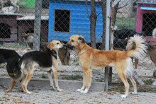 ADA, Hund, Beagle-Mix in Bulgarien - Bild 7