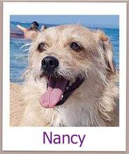 NANCY, Hund, Terrier-Mix in Weisendorf - Bild 6
