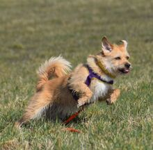 NANCY, Hund, Terrier-Mix in Weisendorf - Bild 9