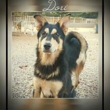 DORI Ein Bildhübsches Und Soziales Hundemädchen Auf Der Suche Nach  Geborgenheit!