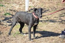 CARMEN, Hund, Malinois-Mix in Spanien - Bild 12