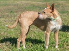 MECHA, Hund, Podenco-Mix in Spanien - Bild 6
