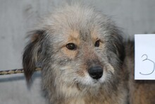 ISANI, Hund, Bearded Collie-Mix in Lohra-Reimershausen - Bild 1