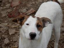 NELLY, Hund, Terrier-Mix in Bulgarien - Bild 3