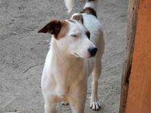 NELLY, Hund, Terrier-Mix in Bulgarien - Bild 6