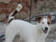 NELLY, Hund, Terrier-Mix in Bulgarien - Bild 7