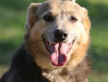 PRINCESA, Hund, Golden Retriever-Mix in Portugal - Bild 10