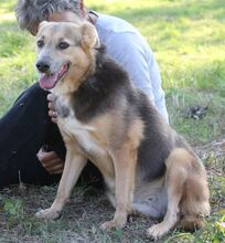 PRINCESA, Hund, Golden Retriever-Mix in Portugal - Bild 14