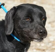 NERO, Hund, Labrador-Mix in Vallendar - Bild 16