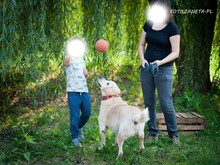 GUFFIE, Hund, Golden Retriever in Martinshöhe - Bild 1
