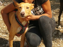 ESME, Hund, Podenco-Mix in Spanien - Bild 2