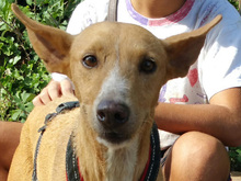 ESME, Hund, Podenco-Mix in Spanien - Bild 9