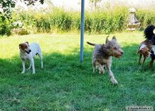 PEDRO, Hund, Podenco-Mix in Herten - Bild 7
