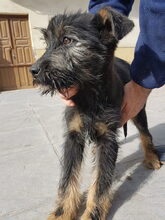 LUCKY, Hund, Schnauzer-Mix in Spanien - Bild 1