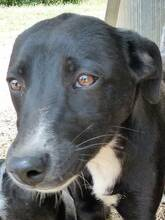 JANA, Hund, Border Collie-Mix in Werl - Bild 27