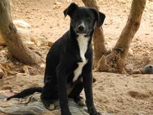 JANA, Hund, Border Collie-Mix in Werl - Bild 44