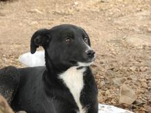 JANA, Hund, Border Collie-Mix in Werl - Bild 45